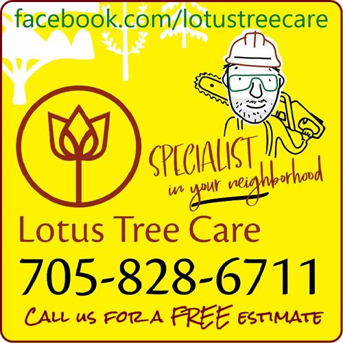 Lotus Tree Care - BAG-HH-IBRD-INN-ON-2C