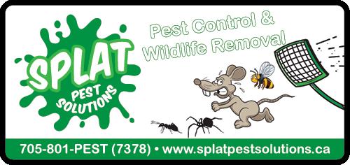 Splat Pest Solutions - BAG-YIG-HUNTS-ON-1